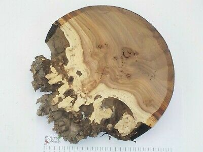 English Burr Elm woodturning or wood carving bowl blank.  280 x 44mm. 3984A