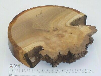 English Burr Elm woodturning or wood carving bowl blank.  305 x 44mm. 3987A