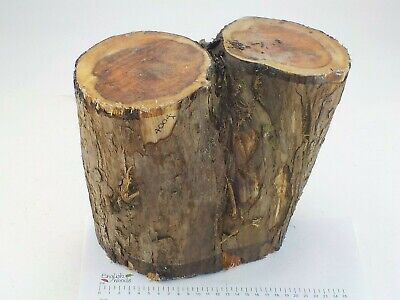 English Crotch Yew woodturning or wood carving log blank. 230x300x180mm. 4004A