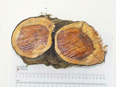 English Crotch Yew woodturning or carving log blank.  180 x 200 x 110mm.  4006A