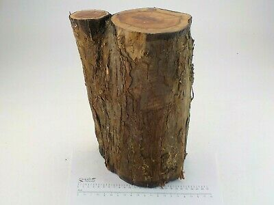 English Crotch Yew woodturning or carving log blank.  180 x 310mm.  4010A