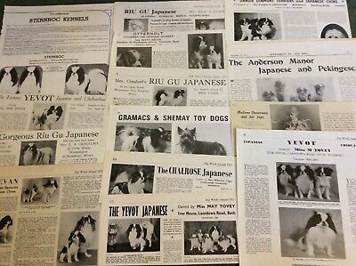 Japanese chin. 20 Original Clippings From 1913 To 1982