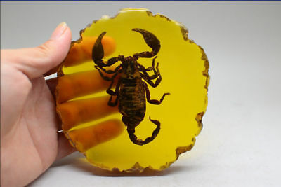 Rare Collectibles Old Decorated Handwork Amber Inside Scorpion Statue h640