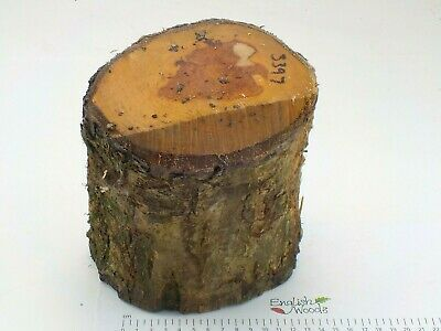 Green English Apple woodturning or carving log blank.  140 x 170mm.  3397