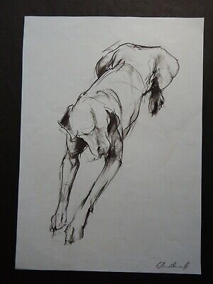 Original expressive style dog drawing lying pose in charcoal pencil on paper