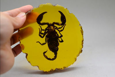 Rare Collectibles Old Decorated Handwork Amber Inside Scorpion Statue h1586