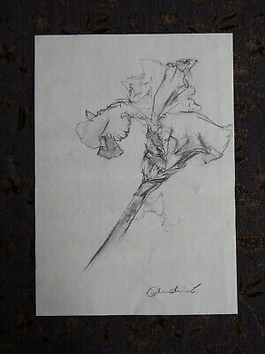 Original Pencil realist expressive line flower drawing of a single iris on paper