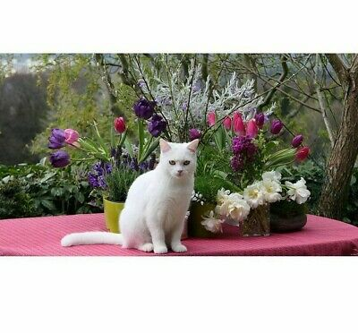 White Cat Diamond Painting Beautiful Flower Design Round Square Drill Embroidery