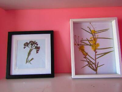 Native flowers (pressed and framed)