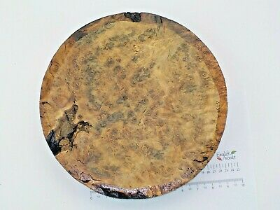 English Burr Burl Oak woodturning or wood carving bowl blank. 305 x 42mm. 4236A