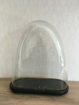 Antique Victorian Oval 13 inch Glass Dome +original Base (34cm high by 30 by 12)