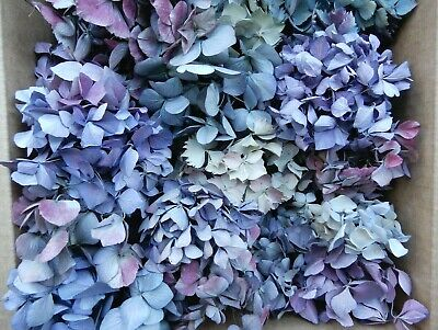 40+ Box Dried Hydrangea Flowers Mixed Pieces Lavender, Purple, Pink  DIY Crafts