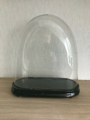 Antique Victorian Oval 15 inch Glass Dome +original Base (38cm high by 37 by 15)