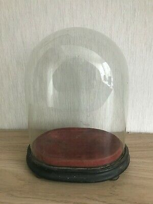 Antique Victorian Oval 8.5 inch Glass Dome + original Base (22cm X 18cm X 13cm)