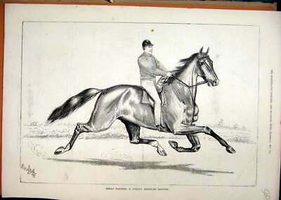 Original Old Antique Print Great Eastern Horse Famous Trotter Man 1877 Victorian