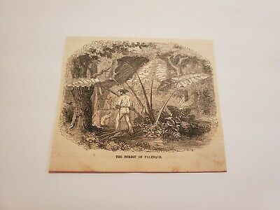 The Forest of Palenque Mexico c. 1854 Engraving (G6)