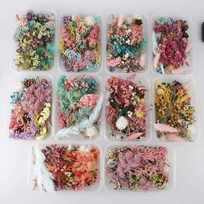 1Box Real Dried Leaf Flowers Plant Herbarium Jewelry Crafts Home Decorations