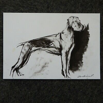 Original signed pencil drawing sketch on paper of a dog standing 28cm x 19cm