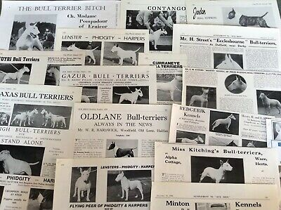 Man/'s Best Friend English Dog Breed Collectors Card Set of 7 THE BULL TERRIER