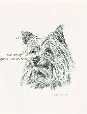 #102 YORKIE YORKSHIRE TERRIER  dog art print * Pen and ink drawing * Jan Jellins