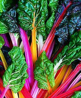 Swiss Chard Bright Lights 50 seeds