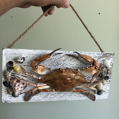 Blue Crab Taxidermy No Paint Natural Wood Rope