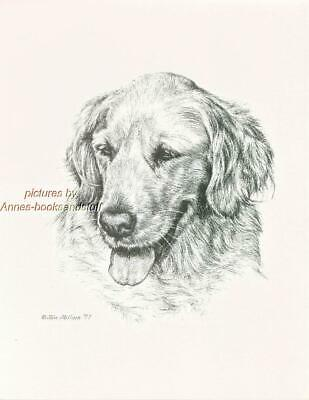 #170 GOLDEN RETRIEVER dog art print * Pen and ink drawing by Jan Jellins
