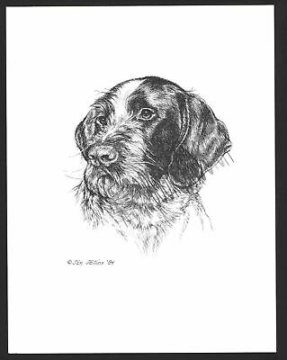 #342 GERMAN WIREHAIRED POINTER dog art print * Pen & ink drawing by Jan Jellins