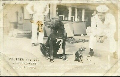 WWI USS Florida Battleship Real Photo Postcard of Soldiers with Two Dogs