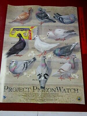 Project Pigeon Watch  16x24 folded poster