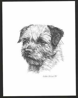 #347 BORDER TERRIER portrait dog art print * Pen & ink drawing by Jan Jellins
