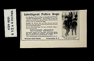1925 Intelligent Police Dogs Willow Gate Farm Princeton NJ Vintage Print ad15146