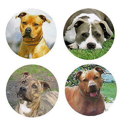 Pit Bull Terrier Magnets:   4 Cool Pit Bulls for your Collection-A Great Gift