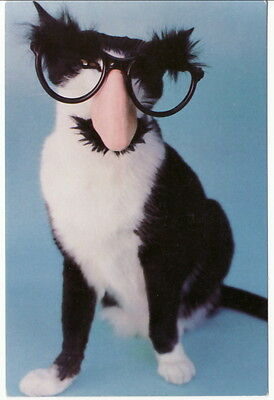 CAT DISGUISED AS GROUCHO MARX Postcard