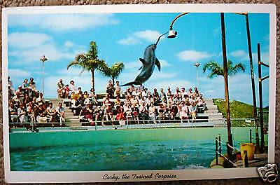 Vintage POSTCARD Corky Miami Florida Trained Dolphin