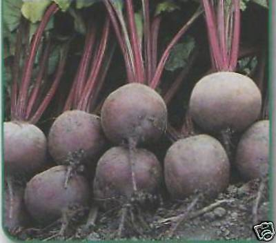 BEETROOT BOLTARDY SEED AP 80 LOW BOLTING 110p FREEPOST
