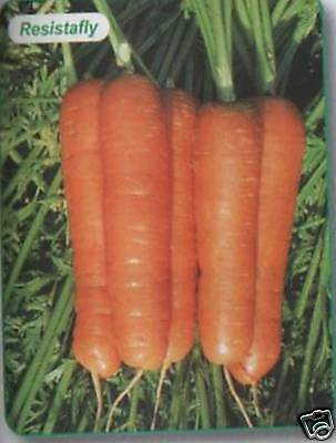 Carrot Resistafly No Root Fly Ap 80 Seed  Freepost