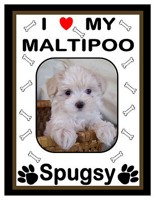 Personalized Maltipoo Photo Magnet