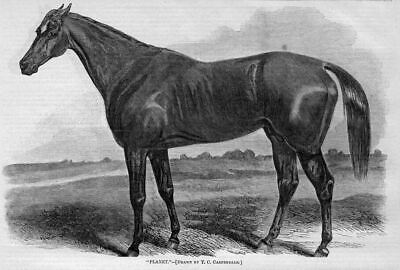 Race-Horse Chestnut Stallion Planet Four-Mile Horse 1860 History Harper's Weekly