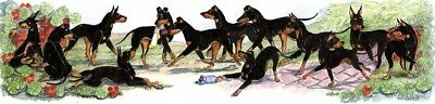 Enid Groves Manchester Terrier  Hybrid Watercolor Print