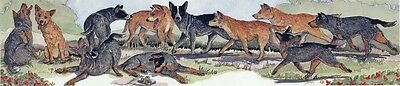Enid Groves Australian Cattle Dog Print