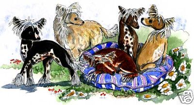 Enid Groves Chinese Crested Hybrid Print