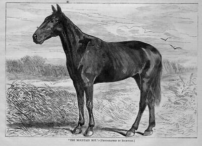 Horse Racing Trotters Mountain Boy 1869 Antique Engraving