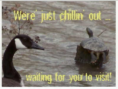 Postcard of TURTLE AND CANADIAN GOOSE