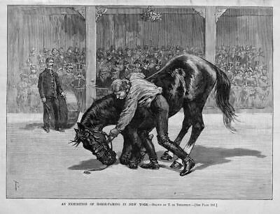Horse-Taming Exhibition In New York Antique Horse Print