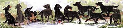 Enid Groves Flat Coated Retriever Print