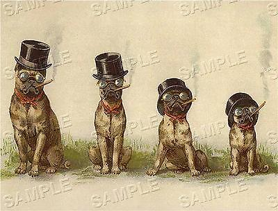 Cigar Smoking Pugs! Vintage Antique Victorian *canvas* Tobacciana Dog Art Print