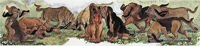 Enid Groves Bloodhound Print