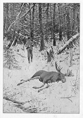A. B. Frost Moose Hunting, Poaching Out Of Season, Hunt