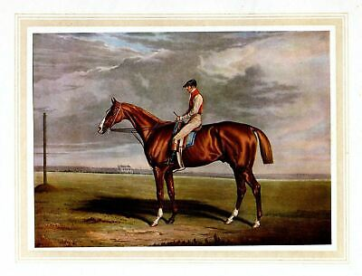Racehorse Velocipede Grandstands Color Print Horse Jockey Saddle Reins Whip